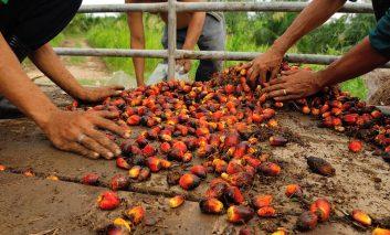 Das Für und Wider des Palmöls